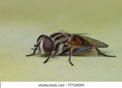 House fly, fly