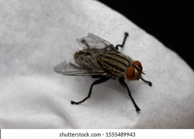 House fly or insect fly on white tissue paper.