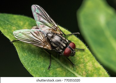 House fly, Fly, House fly on leaf