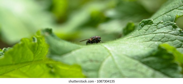 House Fly resting on a leaf