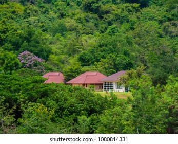House in the forest