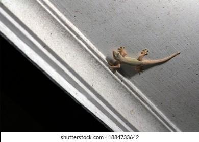 house lizard on the wall