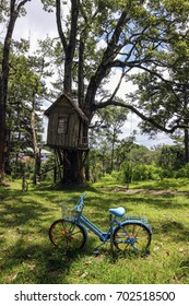 House on tree with bicycle in garden