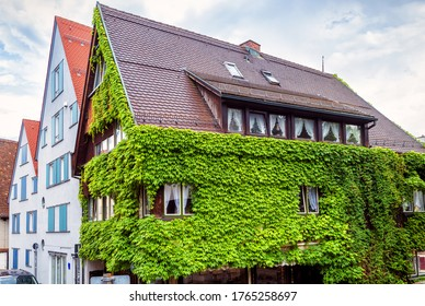 House overgrown with ivy in town of Ulm, Germany. Green building facade in summer. Natural plants on residential structure or hotel, wall with vegetation on street of old Ulm city center.