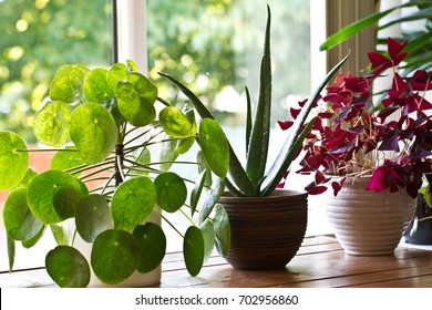 House plant display on the window.Indoor houseplants