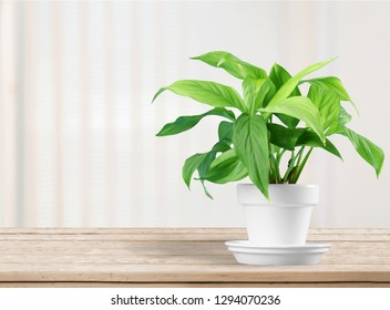 House plant in a flower pot isolated on a white background