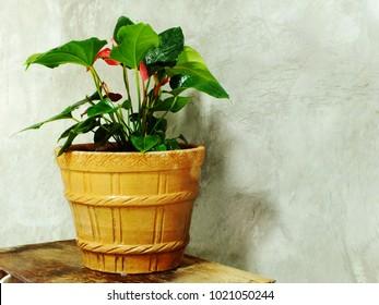 house plant home decor