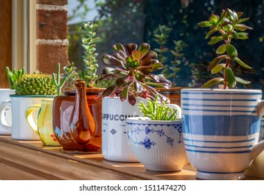 House plants grown in recycled mugs, tea cups, sugar bowl and tea pot displayed in sunny window, recycle, reuse, upcycle for sustainable living and gardening.