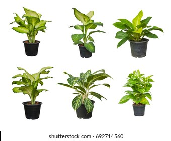 House plants isolated on white background. Set of Tree in pots.