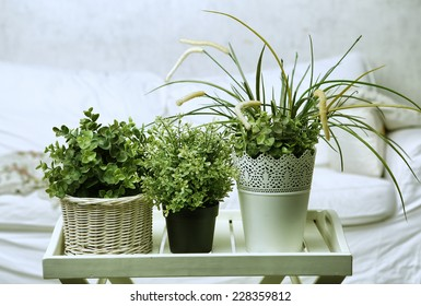 house plants on the white bedroom background