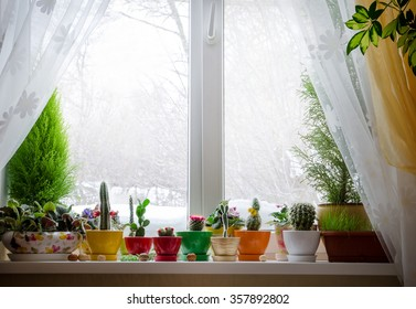 House plants on window