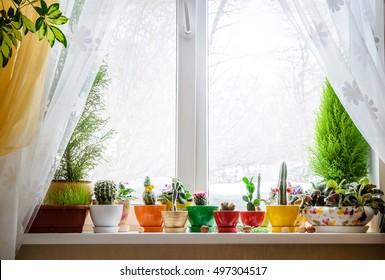 House plants on window