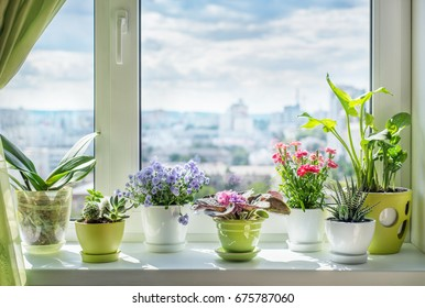 House plants on window. Orchid, cactus, blue flower, violet, carnation, succulent, cala