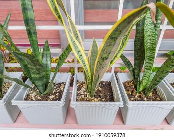 House plants in a plastic pot