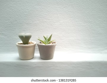 house plants, succulents, cactus and indoor. potted plants and botanical design for the indoor garden -image