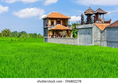 House in rice field in the town of Ubud, Bali