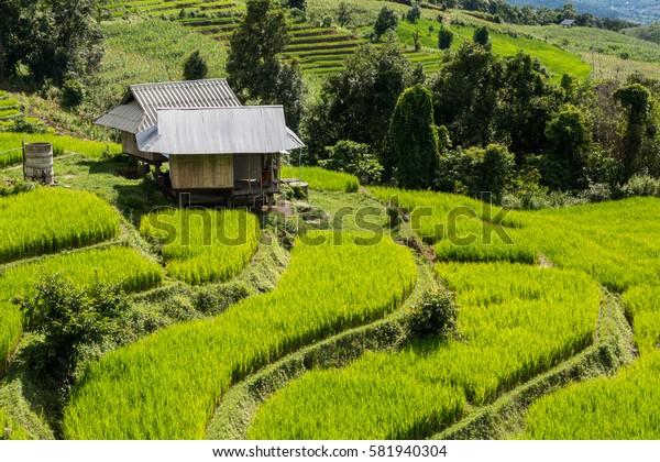 House in rice terrace field