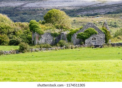 House ruins cover by vegetation in Burren way trail, Ballyvaughan, Clare, Ireland