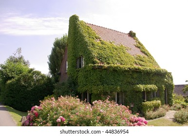 A house in summer covered with ivy