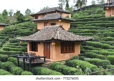 House in the Tea Plantation. Chinese village of Yunnan in the north of Thailand Ban Rak Thai is built on the farm. Green is beautiful in nature.