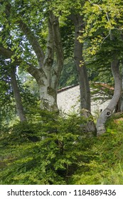 The House Through The Beech Tree Woods