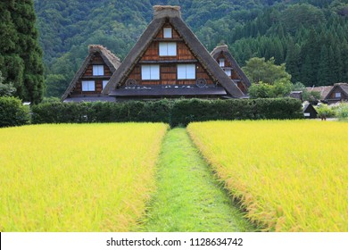 House with Traditional and Historical Japanese village. Shirakawago in Gifu, Japan in autumn. Traditional folk village(Gassho-zukuri). This is traditionally thatched houses in Shirakawa-go.