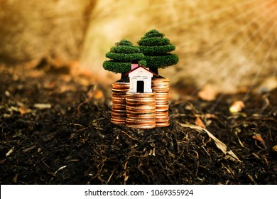 House, trees and coins on nature background present compare the savings with tree planting. or savings to buy a home or real estate. Or show divide the investment. Or for the future Concept of money