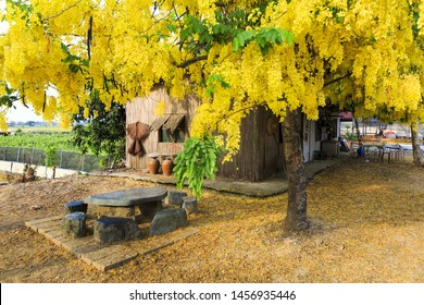 House under golden shower tree,Taiwan