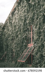 The house at the wall has many ivy.