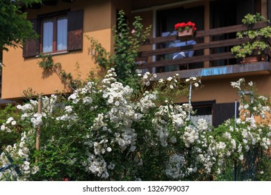 a house with white climbing roses in bloom