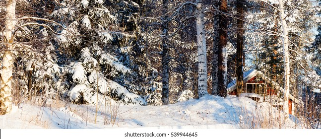 House in the woods among the trees on a Sunny day in winter