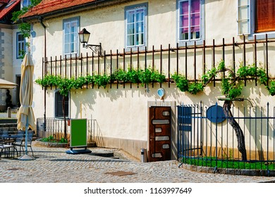 House with Zametovka grapevine at the old town center of Maribor, Lower Styria, Slovenia