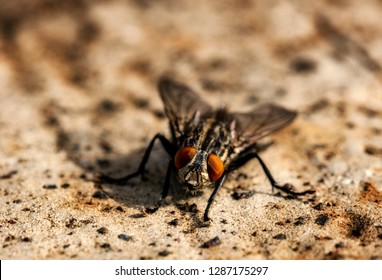 The housefly is a fly of the suborder Cyclorrhapha. It is believed to have evolved in the Cenozoic era.