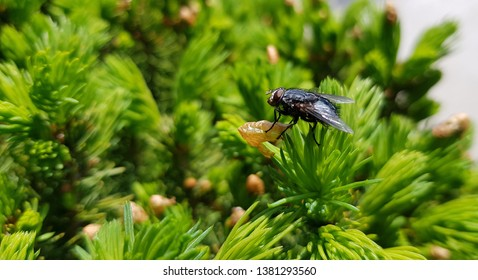 Housefly in natural green background