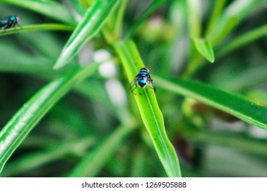A housefly on a green plant leaf