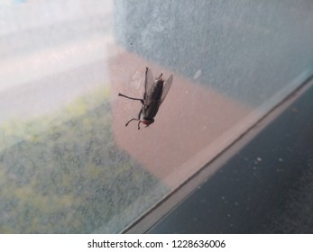 Housefly sitting above the office glass