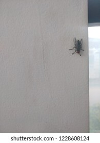 Housefly sitting in a white wall
