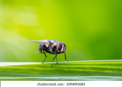 Housefly stay on leaf with natural bokeh green background close up.