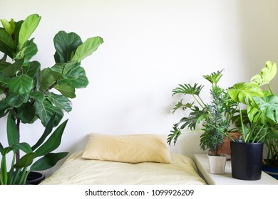 Houseplant in bedroom. Lifestyle home decor. Tree lover concept