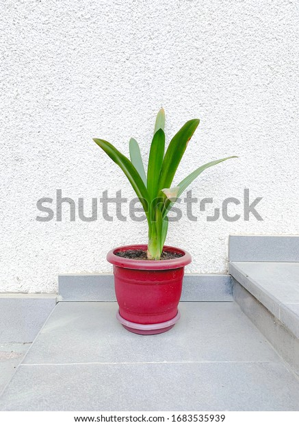 Houseplant isolated in a white background.