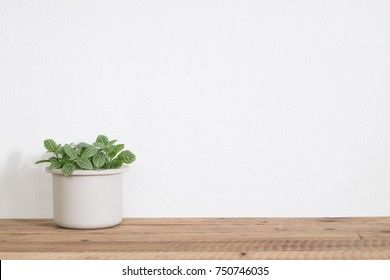 Houseplant on table in room with copy space
