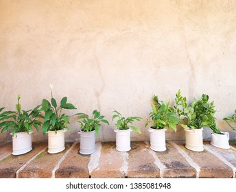 Houseplant with ornamental trees in pots decorate the wall in the house On the tile floor