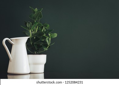 Houseplant in vintage white flower pot and watering can against dark wall with copy space.