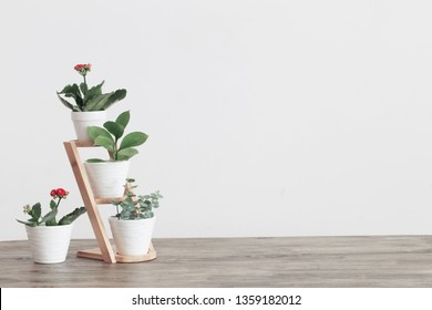 houseplants against  white wall on old wooden table