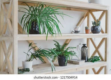 Houseplants, books and other interior items are located on a wooden shelf. home decor, natural