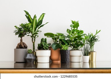 Houseplants in different designed flowerpots on a cabinet