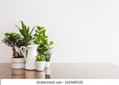 Houseplants in flowerpots on table near white wall