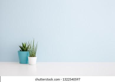 Houseplants in flowerpots on a table near bright blue wall