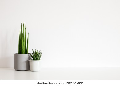 Houseplants in flowerpots on a table near bright white wall.
