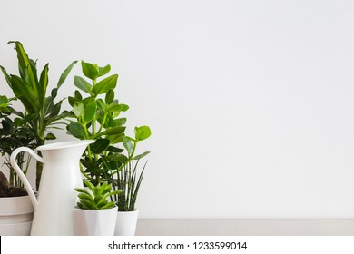 Houseplants in flowerpots and white wall for copy space.